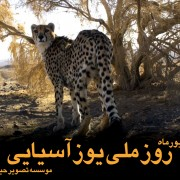 Asiatic-cheetah-day-farsi