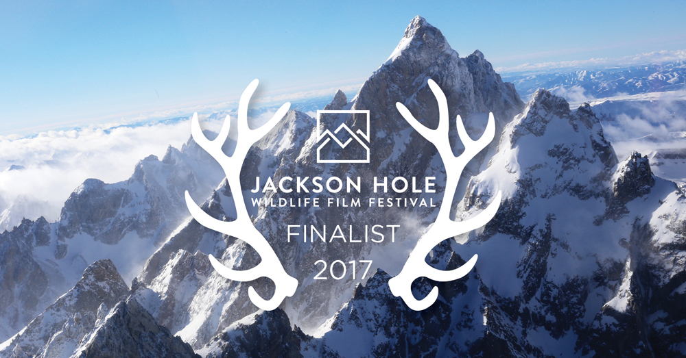 JHWFF_Laurels_Finalist_Facebook